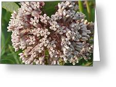 Into The Heart Of A Milkweed Flower Greeting Card