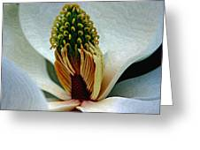 Into The Heart Of The Magnolia Drybrush Greeting Card