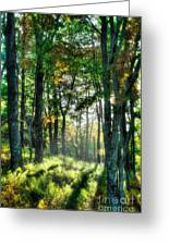 Into The Light I - Blue Ridge Parkway Greeting Card