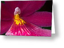 Into The Orchid Greeting Card