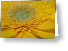 Into The Petals Greeting Card