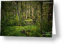 Into The Swamp Greeting Card