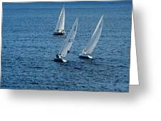 Into The Wind - Crisp White Sails On Blue Greeting Card