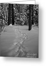 Into The Woods Pisgah Forest Black And White Greeting Card