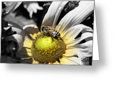 Invitation Accepted Greeting Card