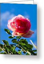 iPhone Case - Pink Rose Greeting Card