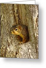iPhone Squirrel In A Hole Greeting Card