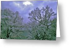 Ir Trees Greeting Card