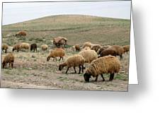 Iran Sheep Greeting Card