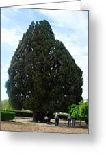 Iran Yazd Cedar Tree Greeting Card