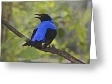 Irena Puella Asian Fairy Bluebird Greeting Card
