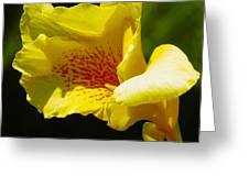 Iris 1 Greeting Card