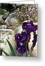 Iris 14 Greeting Card