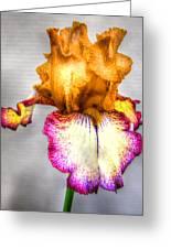 Iris #17 Greeting Card