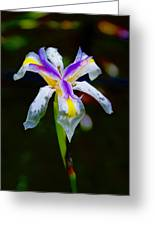 Iris 2012 Greeting Card