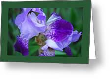 Iris 30 Greeting Card