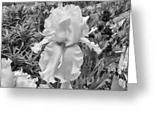 Iris #35 Greeting Card