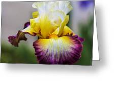 Iris #62 Greeting Card