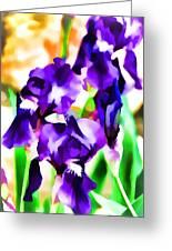 Iris 63 Greeting Card
