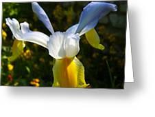 Iris 7 Greeting Card