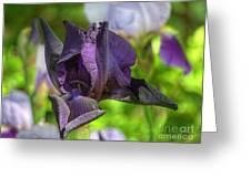 Iris 9 Greeting Card