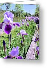 Iris Along Fence - Country - Flower Greeting Card