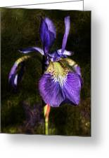 Iris Baroque Greeting Card