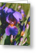 Iris Bloom Greeting Card