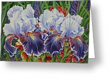 Iris Blooms Greeting Card
