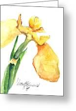Iris Blooms  Greeting Card by Sherry Harradence