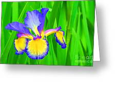 Iris Blossom Greeting Card