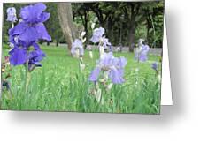 Iris Blues Greeting Card