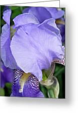 Iris Close Up 2 Greeting Card