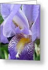 Iris Close Up 3 Greeting Card