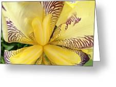 Iris Close Up Greeting Card