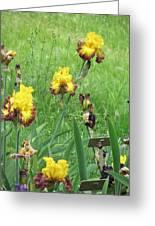 Iris Dancers Greeting Card