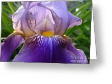 Iris Dancing In The Spring Greeting Card