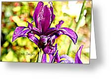 Iris Greeting Card by Debbie Sikes