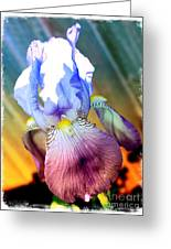 Iris Drama Greeting Card