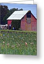 Iris Field And Barn Greeting Card