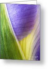 Iris Flower Close Up Greeting Card by Natalie Kinnear