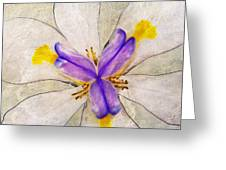 Lily Flower Macro Photography Greeting Card