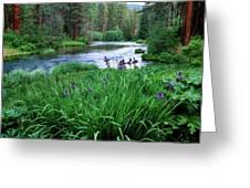 Iris Flowers By The Metolius River Greeting Card