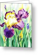 Iris Flowers Garden Greeting Card