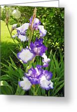 Iris Flowers Greeting Card