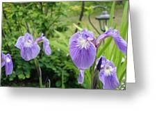Iris Garden Greeting Card