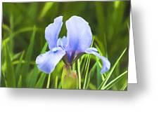 Pale Purple Iris - Impressions Of Spring Greeting Card