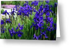Iris In The Field Greeting Card