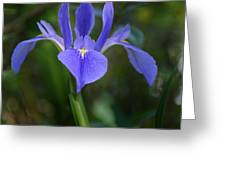 Iris In The Spring Greeting Card