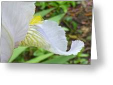 Iris Macro 2 Greeting Card
